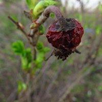 Вам время цвесть, а мне тлести ... (Пушкин) :: Андрей Лукьянов
