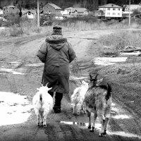 На прогулку. :: Александр Шимохин