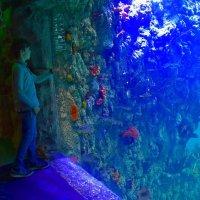 Ребенок в океанариуме :: dindin