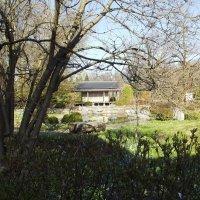 Японский садик в Ботаническом :: Вероника
