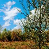 апрельский пейзаж :: Александр Прокудин