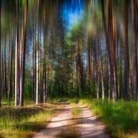 Блуждая по лесным дорогам :: Алексей (GraAl)