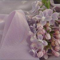 Сиреневая нежность :: Нина Корешкова