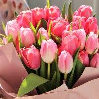 Тюльпановая красота. :: Лариса Исаева