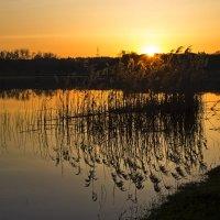 золотое майское утро :: Валерий Хинаки