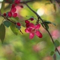 Просто немножко весны :: Ирина Сивовол