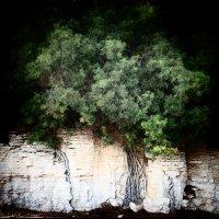 Прорастают корнями столетья... :: Лара Leila
