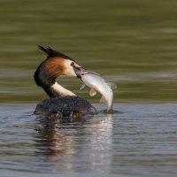 Удачная рыбалка. :: Николай Охотник