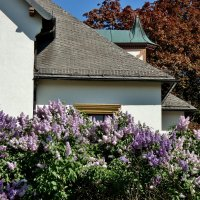 . Весна дарит нам самые яркие краски... :: backareva.irina Бакарева