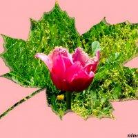 Весна-красна... :: Нина Бутко