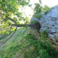 Даже из камня может вырасти дерево :: Светлана Казмина