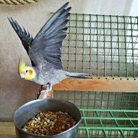 Коро- орел! :: veera (veerra)