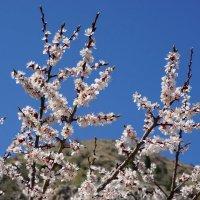 Весна в горах :: Сергей Беляев