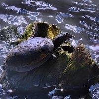 Я на солнышке лежу :: Наталья Лакомова