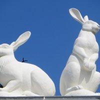 Кролиководство :: Мазутка