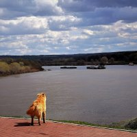 Этот милый пёсик  показал мне много прекрасных мест :: Татьяна Помогалова
