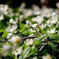 весенняя флора 2 :: Александр Прокудин