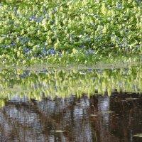 Зеркало весны :: Любовь Тамаркина
