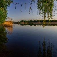 Ивы у воды. :: Владимир M