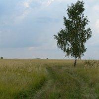 Во поле березка стояла... :: Вячеслав Маслов