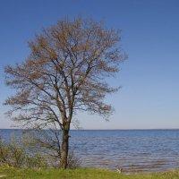 Одинокое деревце :: lady v.ekaterina