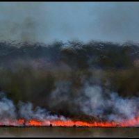 Лесной пожар :: Pepsovich