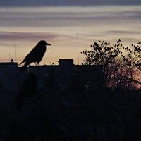 Любуясь закатом... :: Syntaxist (Светлана)