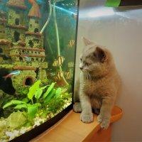 У аквариума :: Вячеслав Маслов