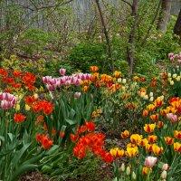 В мире Весны :: GALINA