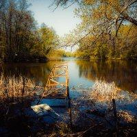 На реке Цне............... :: Александр Селезнев