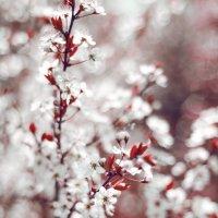 Весеннее цветение :: Наталья Золотарева