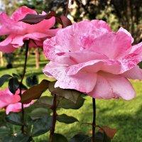 Цветы из райского сада :: Марина