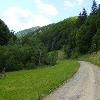 Карпатский   лес   в   Квасах :: Андрей  Васильевич Коляскин