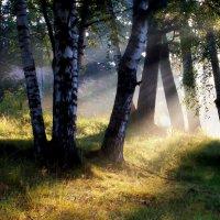 Солнечным утром..... :: Юрий Цыплятников