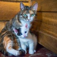 Мама-кошка и котенок :: Юлия Батурина