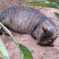 Кошка на сносях :: Герович Лилия