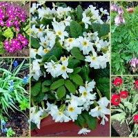 Цветы на даче! :: ирина