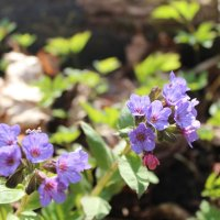 цветы :: Светлана Рябова