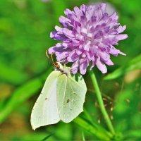 Бабочка :: Константин Анисимов