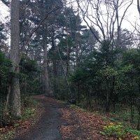 лес :: SergeuBerg