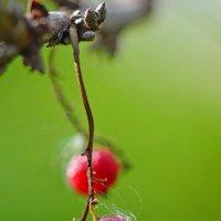 Осенние ягоды :: Татьяна Соловьева