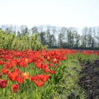 Цветочный рай :: Сергей Котелевец