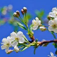 Весна :: kvstu