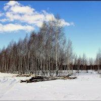 Заготовка леса :: Сергей