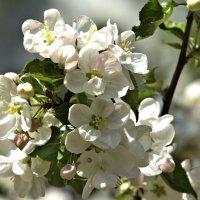 Цветы мая :: Фиклеев Александр