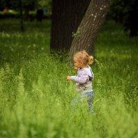 Высокая трава. :: barsuk lesnoi