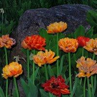Цветы, когда на них никто не смотрит :: Александр Сапунов