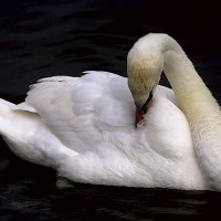Совершенство природы :: Lusi Almaz