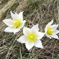 Весенние цветы :: Владимир