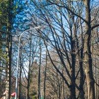 Парк в апреле :: Виталий
